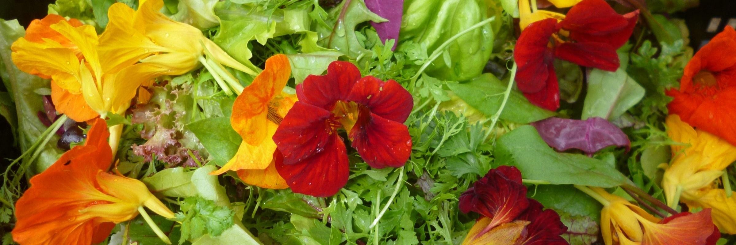 growing flowers for website