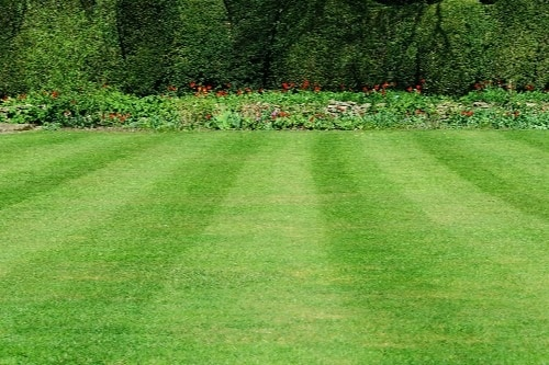 lawns for website