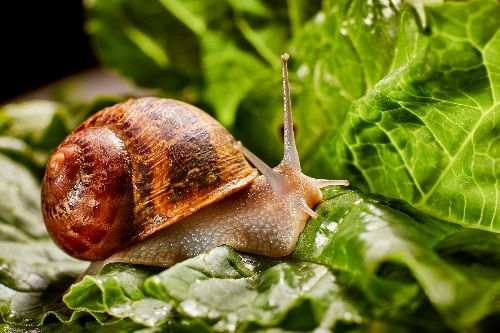 snail for website