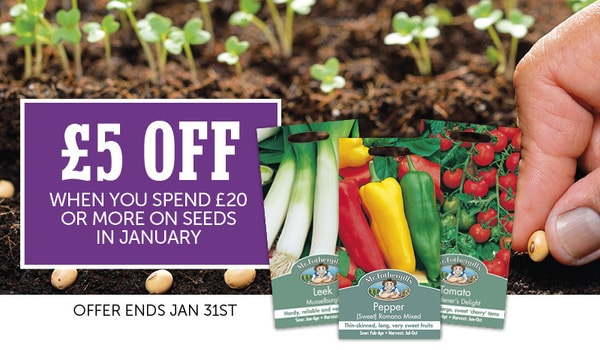 seed offer